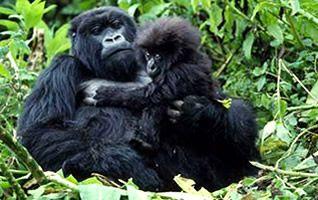 Rwanda Safaris | Gorilla Tours
