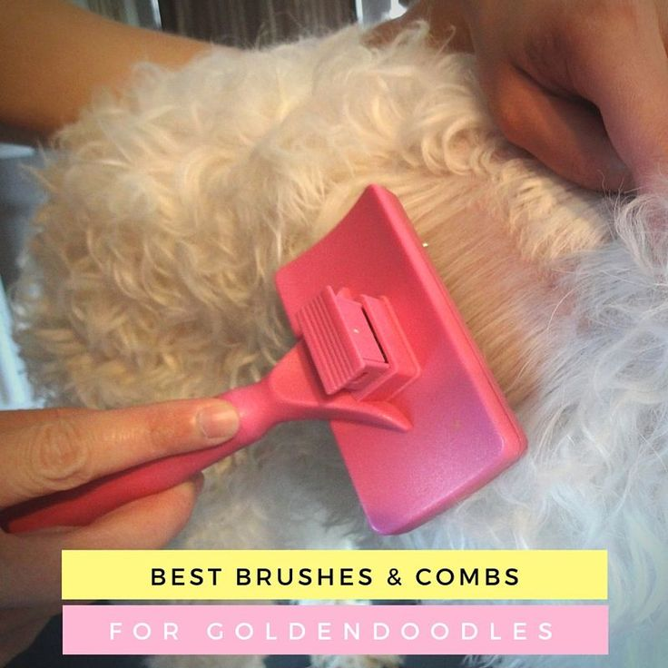 It's important to have proper brushes and to use them regularly. Here are four of the most highly rated brushes and combs specifically for goldendoodles.