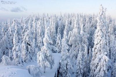 Koli at winter.