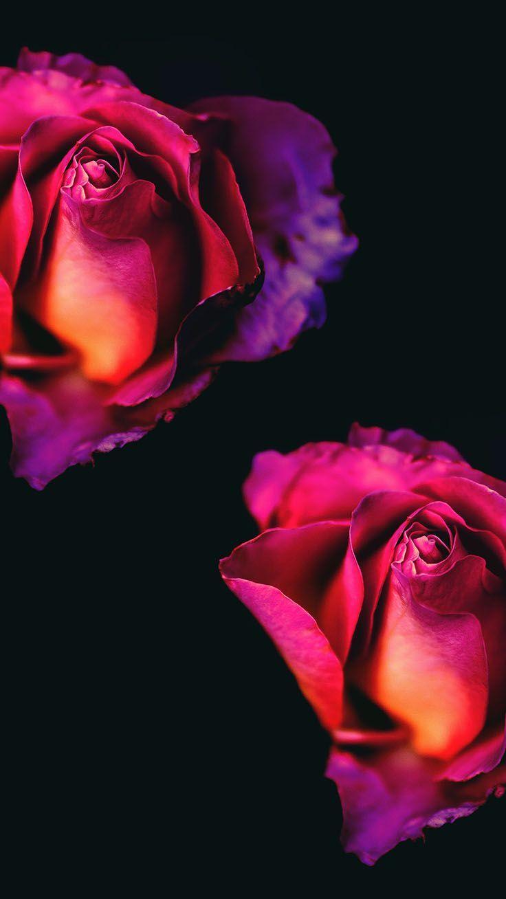 29 Romantic Roses Iphone X Wallpapers Iphone Bakgrunder
