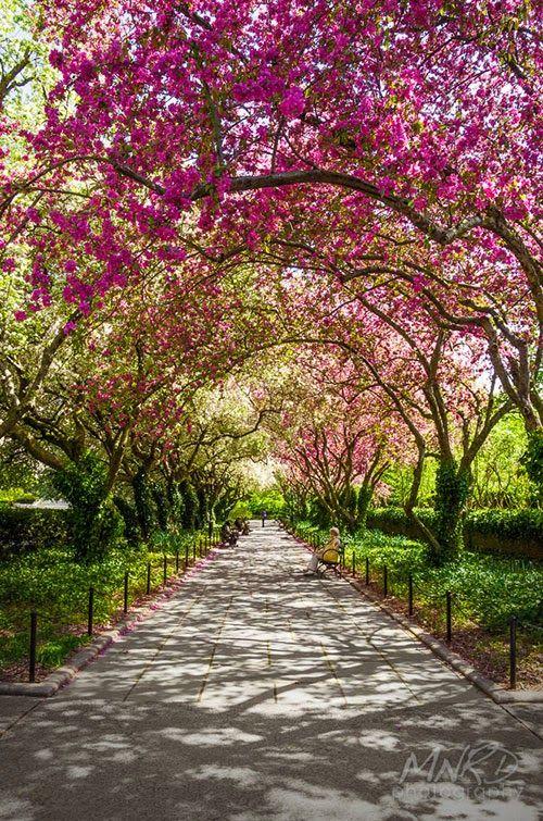 Spring in Central Park Manhattan, New York City