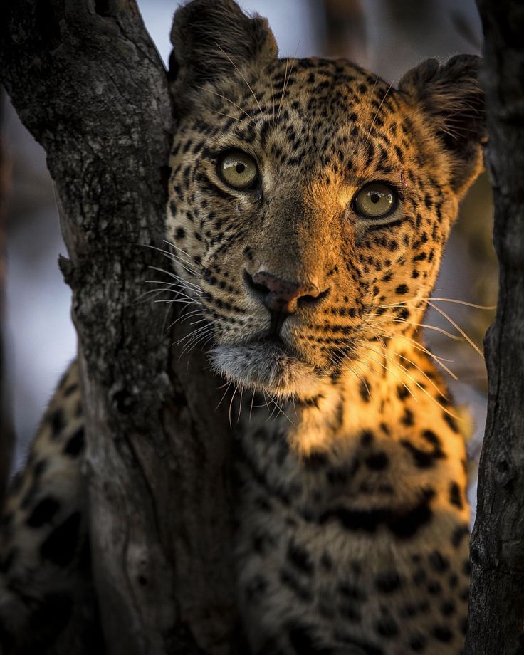 Beauty by Chris Fischer - Photo 170908389 - 500px