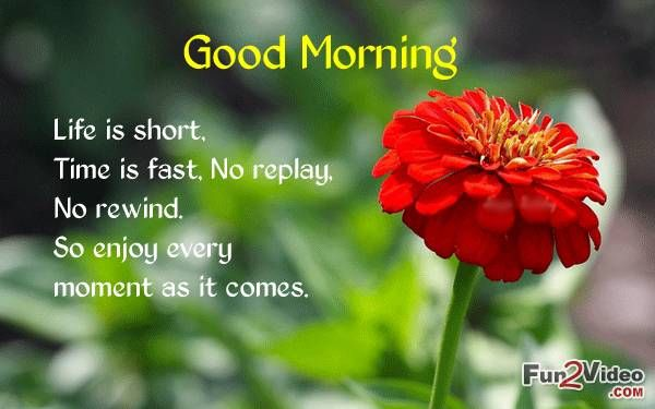 Life is Short Good Morning  [ More Good Morning Quotes: http://www.fun2video.com/quotes-pictures/ ]