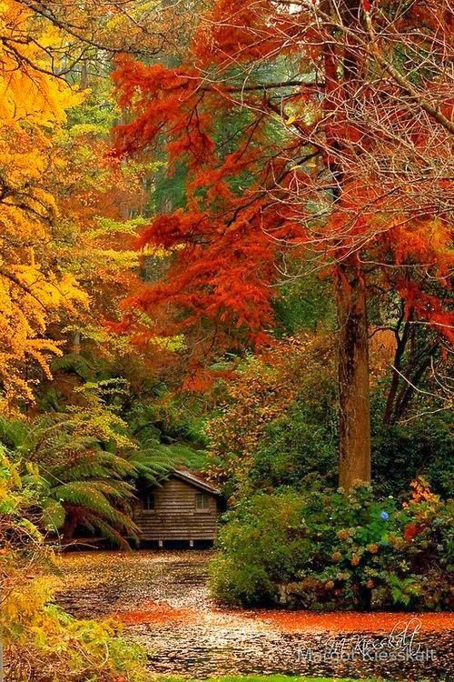 Autumn, The Dandenongs. Australia, I want to be there