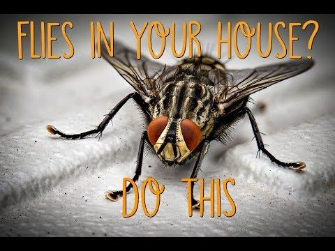 Why Are There Flies In My House All Of A Sudden Find Out Where
