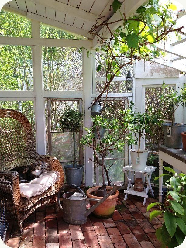 D et växer för fullt i växthuset, och det är grönt och skönt! Vinrankan har långa rankor och små vindruvsklasar börjar skymta. Den stora kor...
