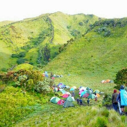 SAVANA Merbabu. ♡ In #MerbabuMountain we can find a lot of acreage #Savana or Sabana divided by some postal climbing. Among them was the Sabana I and Sabana II. ♡ Sabana I and Sabana II Merbabu is a favorite among  the mountain climbers, not only for being a post resting from the long climb or overnight before the ascent to the summit. but to be enjoyed because the scenery in Sabana Merbabu is amazingly beautiful.