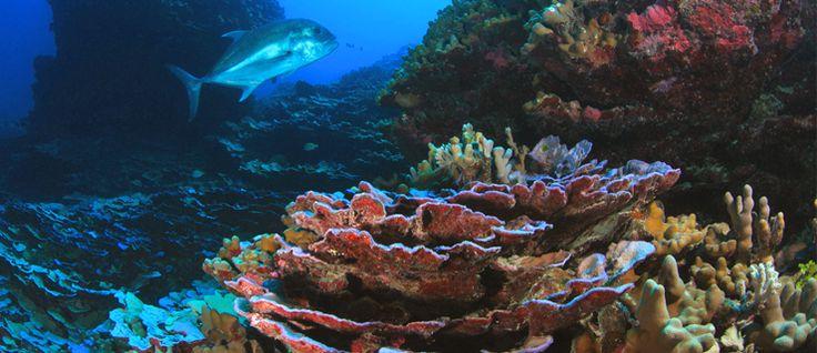 http://mundodeviagens.com/protetor-solar/ - E se lhe disséssemos que o protetor solar que utiliza quando vai a banhos também é responsável pela morte dos recifes de coral? Pois, nem mais. A informação foi recentemente avançada por um estudo do toxicopatologia: após várias análises, os investigadores chegaram à conclusão de que o creme que nos protege contra a radiação ultravioleta está a contaminar os ecossistemas do Havai e das Ilhas Virgens.
