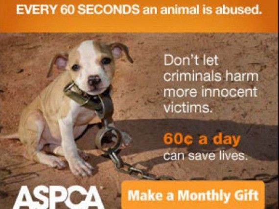 Timmy became the poster pup for the ASPCA and abused dogs.