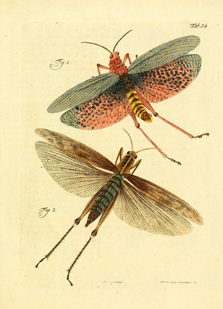 Archiv der Insectengeschichte  Winterthur :Bey dem Herausgeber und bey Heinrich Steiner und Comp.,1781-1786.  Biodiversitylibrary. Biodivlibrary. BHL. Biodiversity Heritage Library
