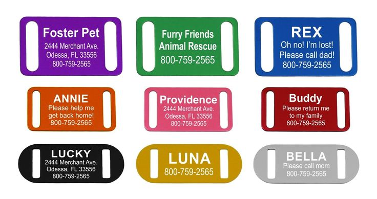 Slide-On Pet ID Tag   Collar Tag   3 Sizes and 9 Colors to Choose From * Find out more about the great product at the image link.