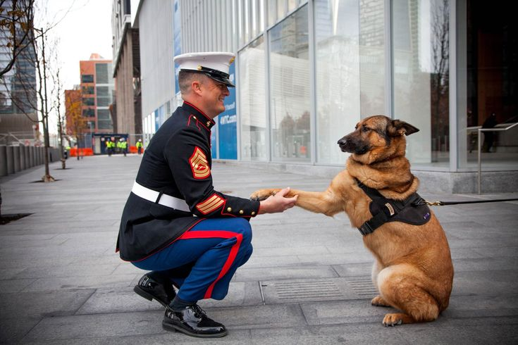 Lucca, the K-9 Hero Who Risked Her Life to Save 14 Men