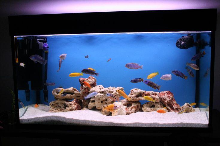 25 best ideas about fish aquarium decorations on pinterest aquarium ideas fish tank. Black Bedroom Furniture Sets. Home Design Ideas
