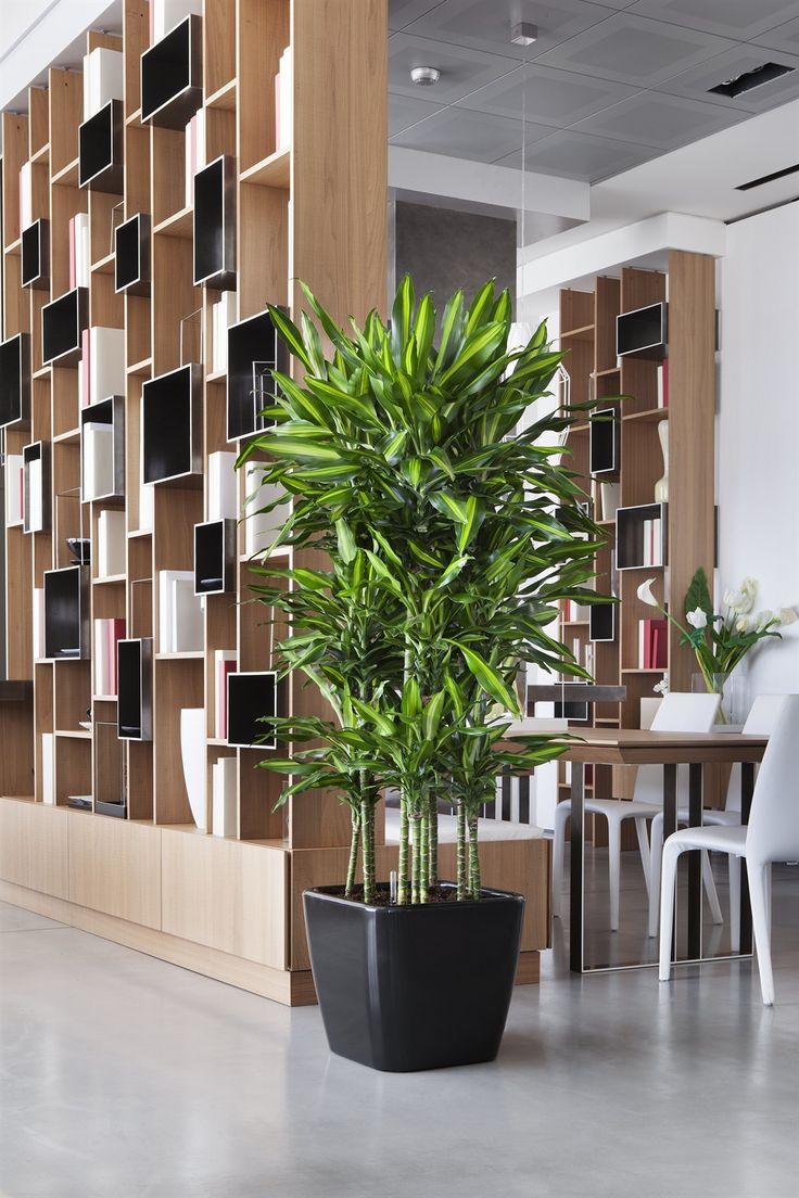arredare con le piante - Cerca con Google