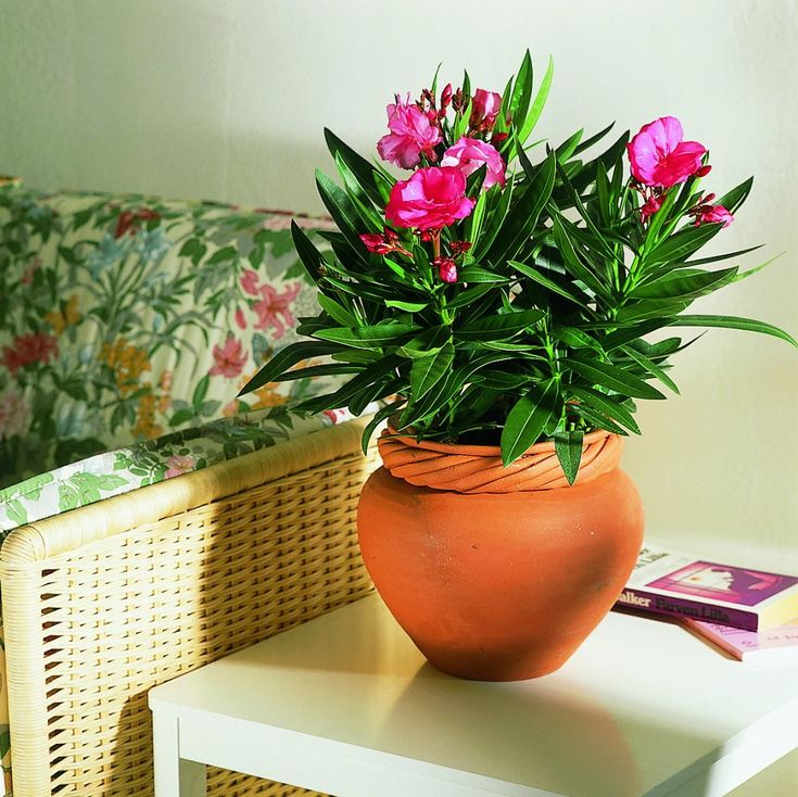 Самые ароматные комнатные растения. Цветы с лучшим запахом. Список названий с фото - Ботаничка.ru