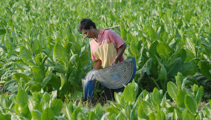 Program kemitraan Sampoerna dinilai efektif dalam meningkatkan produktivitas pertanian | PT Rifan Financindo Cabang Pekanbaru Manajemen mencatat sampai saat ini setidaknya ada 27 ribu petani dari Madura, Jember, Bondowoso, Lumajang, Rembang, Wonogiri, dan Purwodadi yang menjadi mitra program…