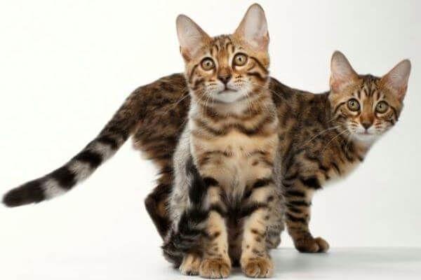 Curiosidades Y Respuestas A Todas Tus Preguntas Gatos Mascotas Animal Doméstico