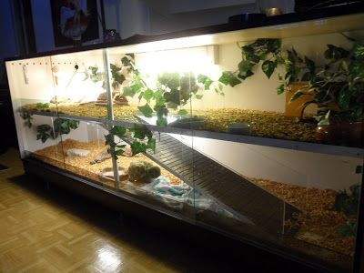 I love how they expanded the terrarium by making it multilevel! Genius!