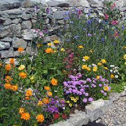 Edible Garden Border   Great Website For Edible Landscaping Designs