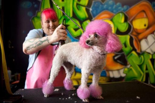 29 best the dog salon images on pinterest dog salon dog wash and charlottes favorite pet grooming salon self serve dog wash solutioingenieria Gallery