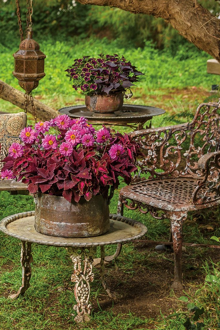 The rich colors in this plant combination provide a wonderful contrast to the heavy patina finish of the table and chair. Dahlightful Lively Lavender is anew variety this spring, a strong choice for large containers or the landscape.