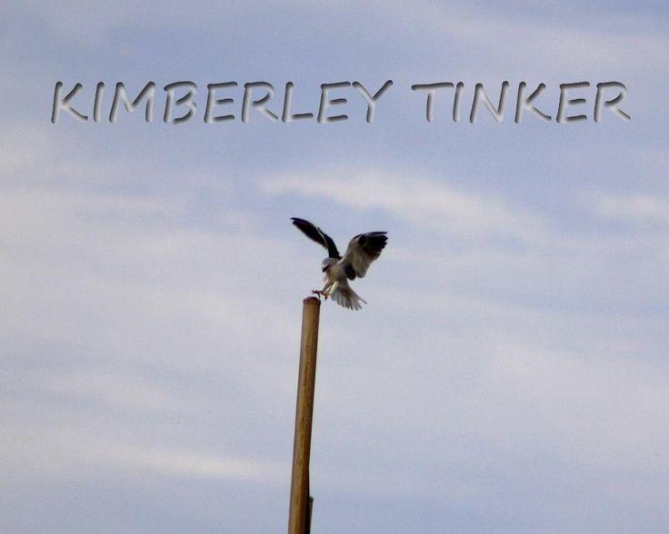 Kite Western Australia