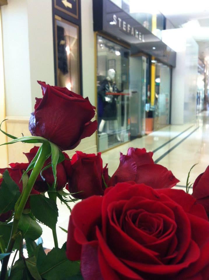 Stefanel store seen between the roses