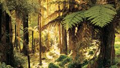 Sherbrooke Falls Trail, Yarra Valley & Dandenong Ranges, Victoria, Australia