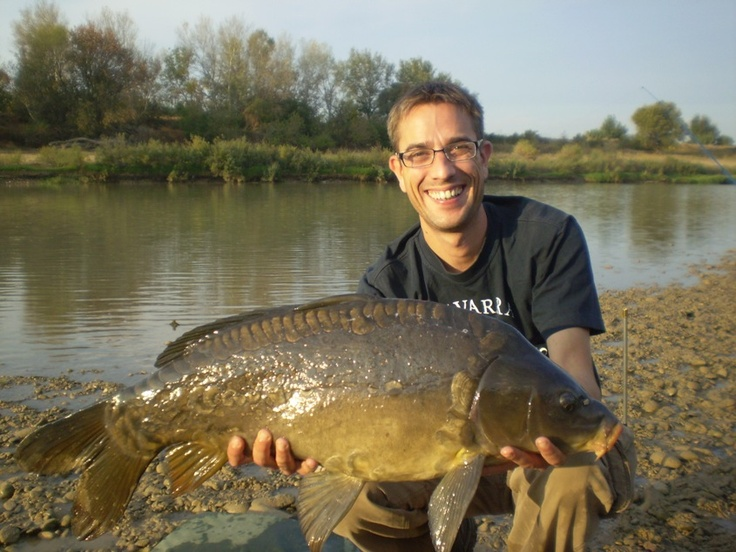 An Ebro linear mirror carp
