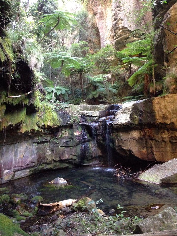 Canarvon Gorge Moss Garden