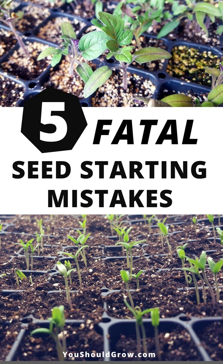 Seed starting mistakes: Starting seeds is so exciting, but what's a gardener to do if they're having problems germinating seeds? If you're wondering what went wrong, you may have made one of these fatal seed starting mistakes. via @youshouldgrow