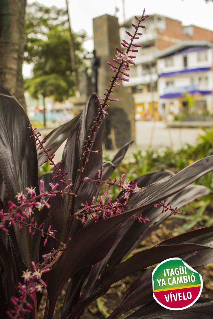 Flores en el renovado Parque Obrero de Itagüí