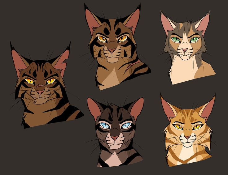 tigerstar and sasha into the woods pdf
