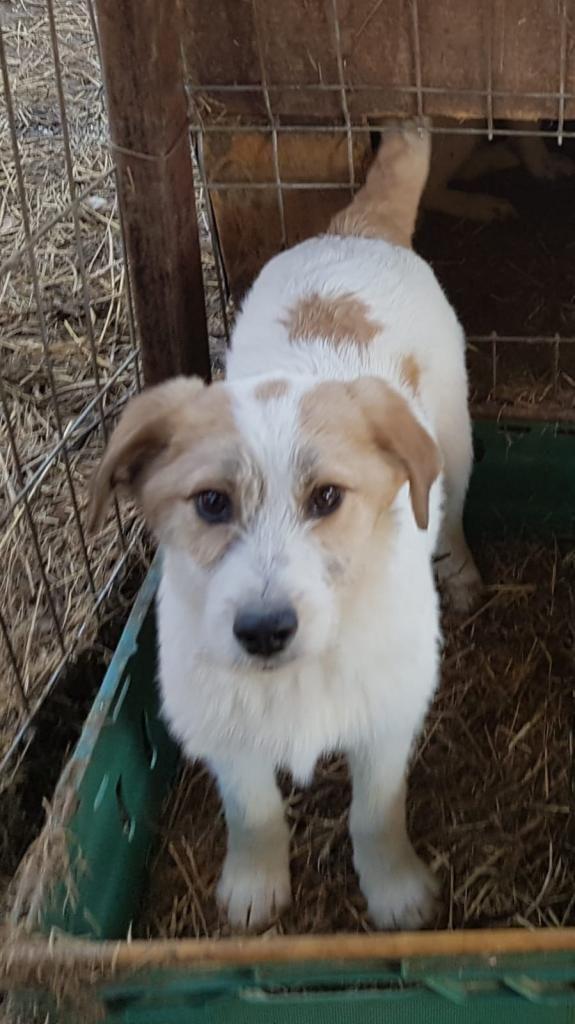 Tiervermittlung De Hunde Katzen Und Viele Andere Tiere Suchen Ein Zuhause Tiere Suchen Ein Zuhause Tierheim Hunde Tiervermittlung Hunde