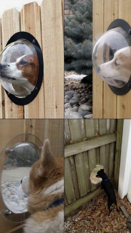 Dog window for fence Dog rooms, Diy dog stuff, Dog yard