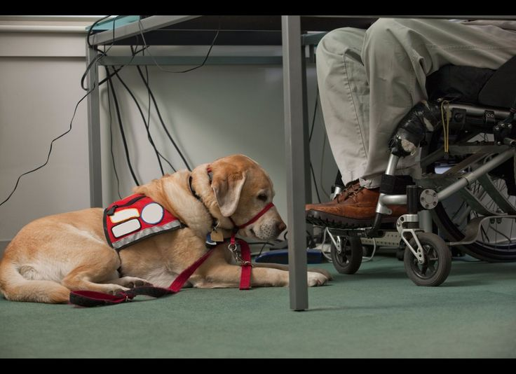 service dog facts things you didnt know about animals that aid the disabled - Jobs With Animals Best Jobs Working With Animals
