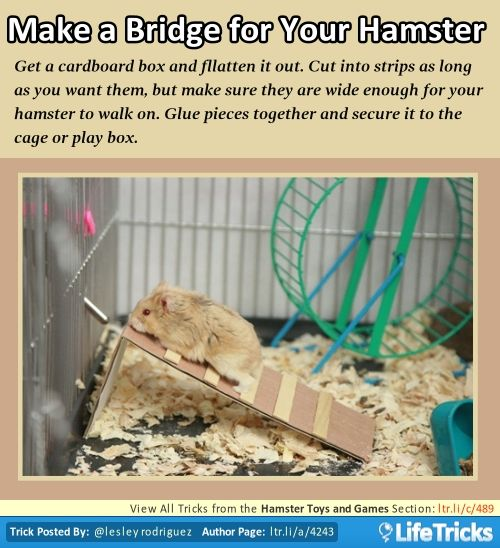 Hamster Toys and Games - Make a Bridge for Your Hamster