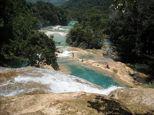 Las cascadas de agua azul, en MEXICO. Los afluentes de barrios ríos se unen para formar una caída de agua única, que cae desde acantilados en el estado de Chiapas. El color se produce por la presencia de sales de carbonato, un tono que contrasta con la densa vegetación.