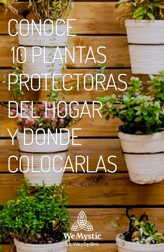 Albahaca, canela, cactus, helechos, hierbabuena, romero, laurel, dracena, rosas, lavanda, bambú