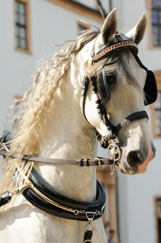 This horse has beautiful eyes and expression. tickled-fancy