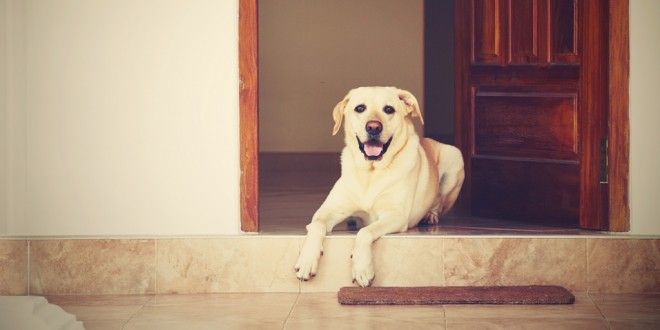 Laws for #petowners living in apartments http://www.dogexpress.in/laws-for-pet-owners-living-in-apartments