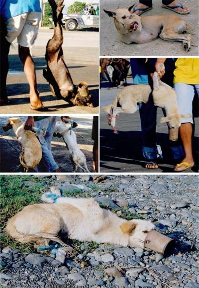 This is how animals are treated in several Asian countries, for food and export -- fur to the USA