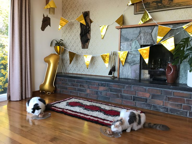 Wonton & Hermes turn 1! Cat birthday celebration