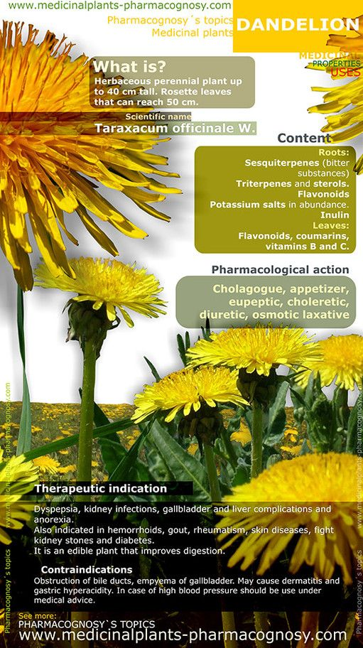 Dandelion. Infographic. Summary of the general characteristics of the Dandelion plant. Medicinal properties, benefits and uses more common of Dandelion. http://www.medicinalplants-pharmacognosy.com/herbs-medicinal-plants/dandelion/benefits-infographic/