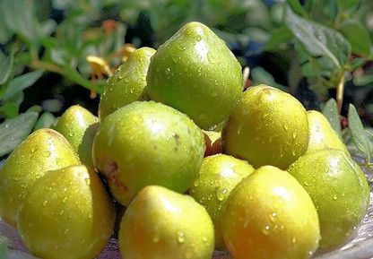 Our homegrown Kakadu Plum is a native skin saviour for its powerful antioxidant and vitamin content. One of the richest sources of Vitamin C in the world (studi