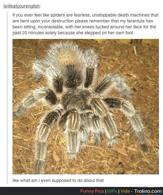 Pet tarantula on face - photo#26