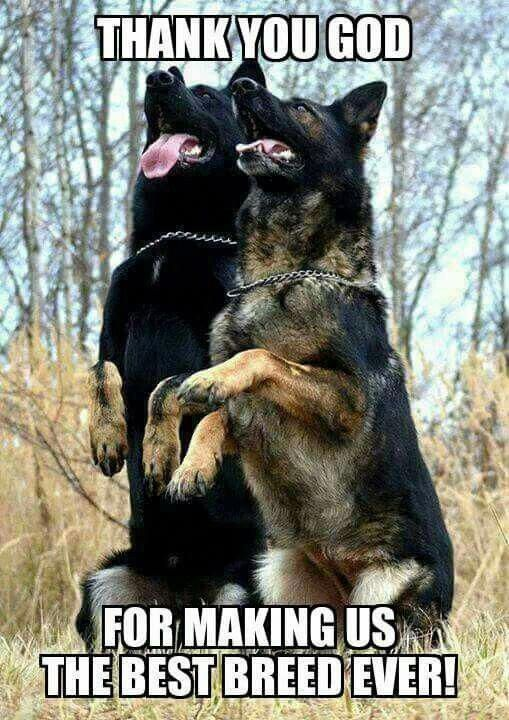 Phobic Dogs Names Doggie Traindogwebsite German Shepherd