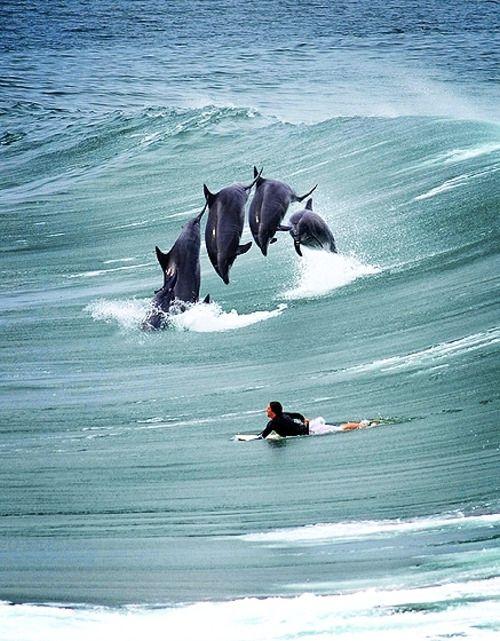 Ocean 経験