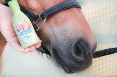 Viele nützliche Dinge rund ums Pferd bekommt man …