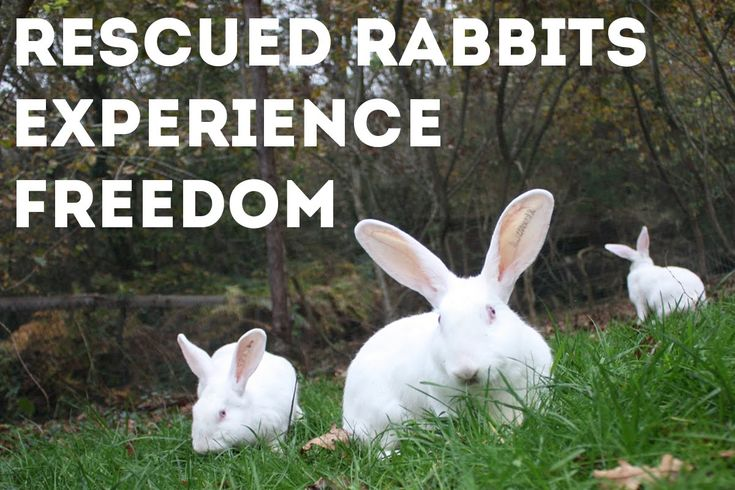 God this is beautiful <3. Rabbits Rescued from Laboratory Experiments Take First Steps of Freedom. http://www.onegreenplanet.org/animalsandnature/rabbits-rescued-from-laboratory/